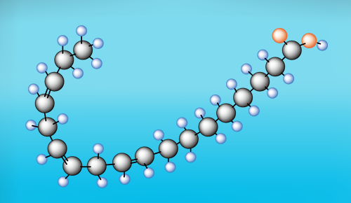 α-リノレン酸分子モデル