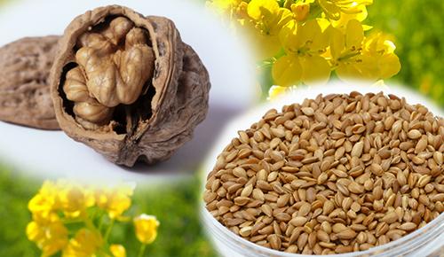 α-リノレン酸を多く含む食材